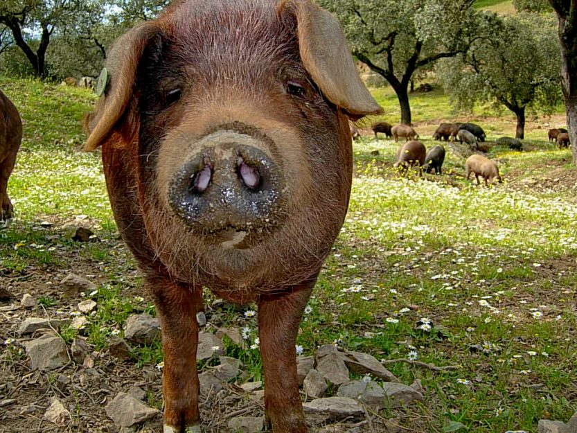 Extremadura: Lecker essen im wilden Westen Spaniens